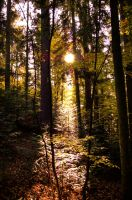 autumn forest no.5 by Tschisi