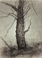 tree018 by Lusidus