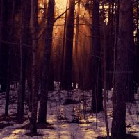 Sunset In The Forest by LindaMarieAnson