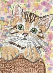 Bengal kitten  watercolor aceo painting by tulipteardrops