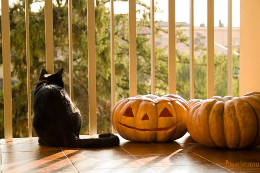 Waiting for Halloween.. by AlexisPhotoart