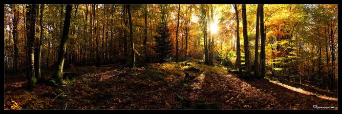 Woods in Autumn - panorama by FlorentCourty