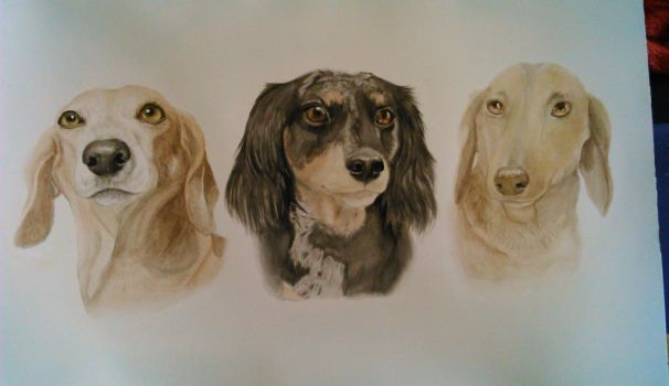 Trio Dachshunds by Featherd9TailsWolf