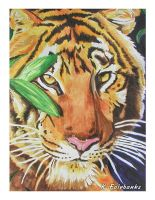 Tiger Portrait (watercolor painting) by kfairbanks