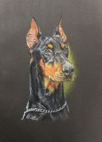 Doberman - Loki by Harmony1965