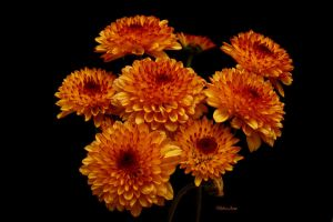 A cluster of Suns by Deb-e-ann