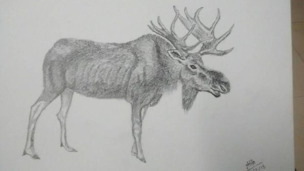 moose sketch by markaunit