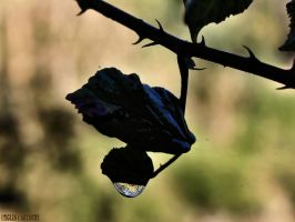 World in a Drop..... by Tigles1Artistry
