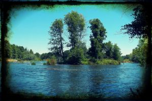 3 Trees At The American River In Sacramento by anrandap