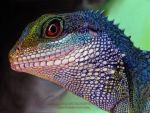 Chinese Water Dragon Drawing by AmBr0