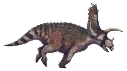 Titanoceratops ouranos by Paleocolour
