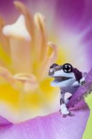 Young Milk frog by AngiWallace