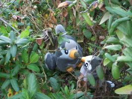 Staravia and Starly in nest.