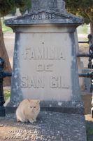 Cat in the cemetery by oscargascon