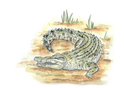 Alligator by Ink-and-think