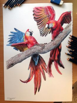 Aras Color pencil Drawing by AtomiccircuS