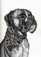 Boxer Commission Pen and Ink by LeoEyes