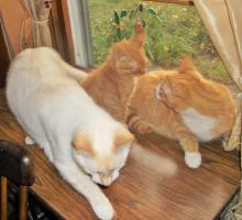 Sabrina, Cuddles and Scotty in the Kitty Window by MystMoonstruck