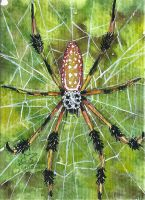 Golden orb weaver (ACEO) by Woodswallow