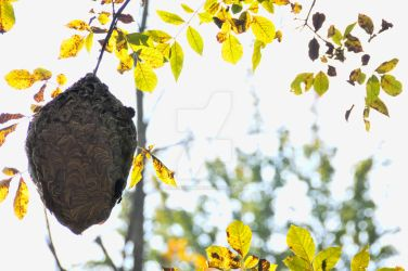 Wasp Nest In the Woods by screamingmeme