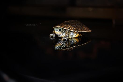 Tiny Turtle by Saher4ever