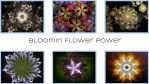 BloominFlowerPowercover1 by audiomonk
