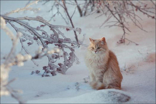 icy winter 003. by LinAt