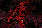 Red autumn by VesnaRa-14