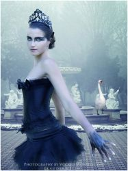 Black Swan by LadyAmdis