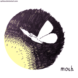 Moth by Quiless