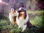 2 Cool Dogs by hermio