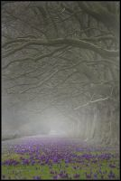 fog forest by mistinesseye