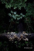 Bioluminescent Shrooms by melvynyeo