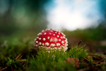Poisonous by Elfvingphotography