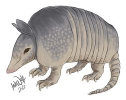 Armadillo by IndiWolfOnline