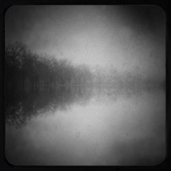 Listening Trees by intao
