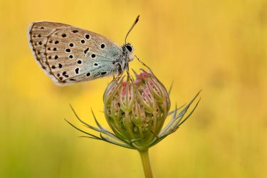 large blue by MartinAmm