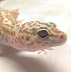 Tremper Beauty by reptiara