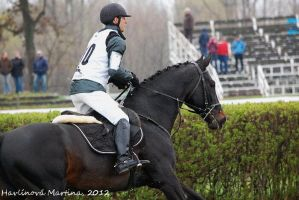 Porthos M in cross country by martinahavlinova