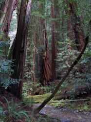 Endor by Ihearvoices