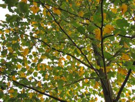 green and yellow leaves by DisneyPrincessNeeNee
