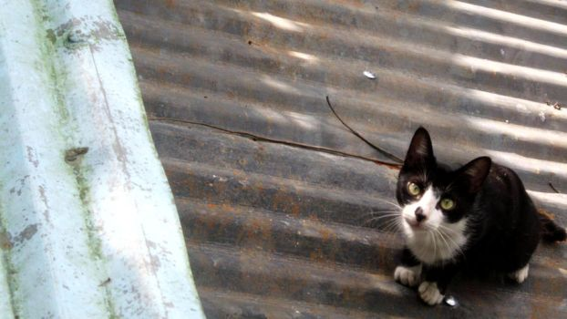 .cat on our roof. by atsayngmundo