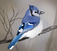 Jay by Roaben