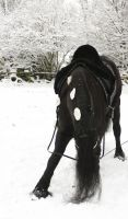friesian bow in the snow by Nexu4