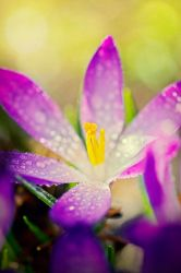 Signs Of Spring by MarcoHeisler