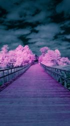 Pink Tree Boardwalk by BrittMartin