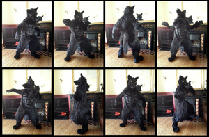 Angrist Wolf Fursuit (plus video) by CuriousCreatures