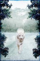 White tiger by Aysha1994raven