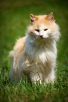 A Cat by Fragoline