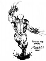Wolverine 2 - Lille 2007 by SpiderGuile